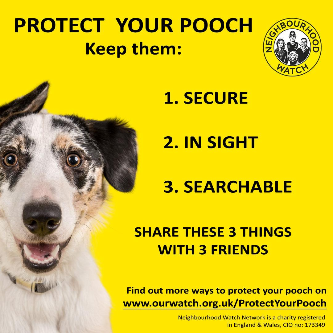 Protect your pooch